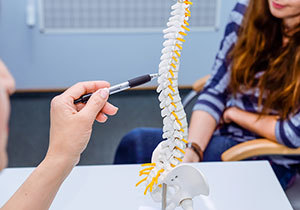 Student exploring human spinal column in Chiropractic School;